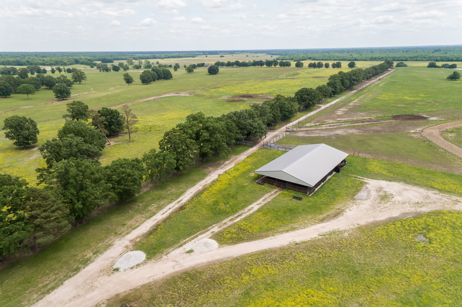 Working Cattle Ranch in Northeast TX Red River County